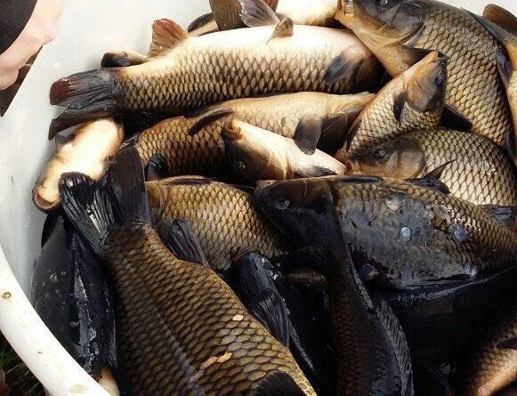 Fischbesatz 2017/2018